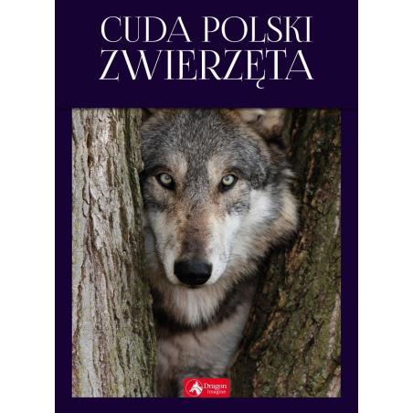 CUDA POLSKI ZWIERZĘTA Łukasz Przybyłowicz