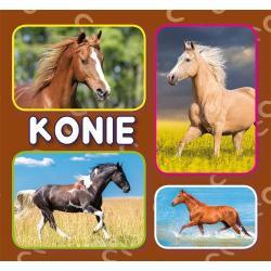 KONIE (HARMONIJKA)